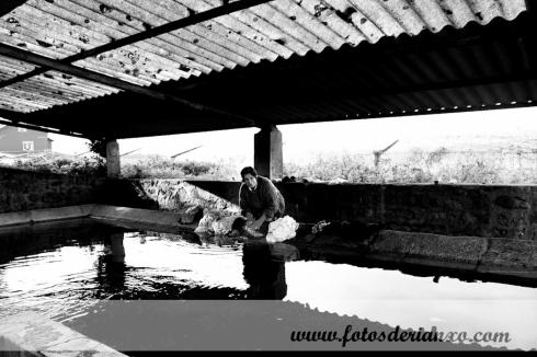 lavandeira (7)