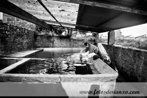 lavandeira (8)